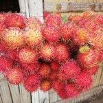 Nephelium lappaceum Fruit