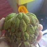 Annona squamosa Plod